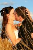 Beijos da grama Imagens de Stock