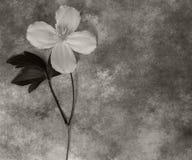Beileidkarte - weiße Blume Stockfotografie