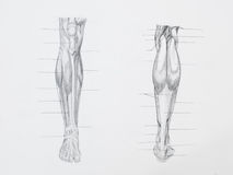 Bein mischt Bleistift-Zeichnung mit Stockfotografie