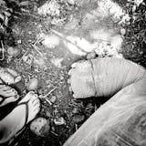 Beine der menschlichen und riesigen Schildkröte Lizenzfreies Stockbild