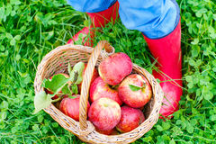 Beine des Kindes in den gelben Regenstiefeln und in den roten Äpfeln Stockfoto