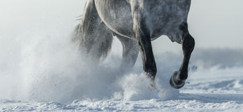 Beine des Pferdeabschlusses oben im Schnee Stockbilder