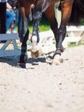 Beine des Pferds in der Bewegung Abschluss oben Stockbilder