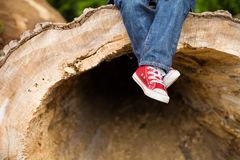 Beine und Füße eines kleinen Kinderjungen Rote Turnschuhe und Blue Jeans Kind, das auf einem enormen Schnittbaum im Freien sitzt Stockbild