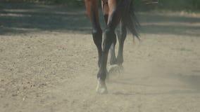 Beine und Kopf des Pferds, wie er in Zeitlupe galoppiert Hufpferd stock video