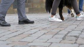 Beine von den Mengen-Leuten und Hund, die auf den Fußgängerübergang in der Zeitlupe gehen stock video