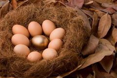 Being different. One single golden egg between nine ordinary ones, just be different Stock Image