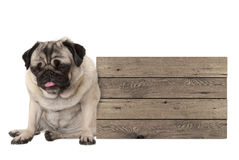 Being fed up pug puppy dog sitting down next to blank wooden sign Royalty Free Stock Photography