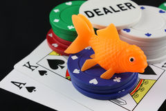 Being a little fish at poker. Means you will probably get eaten by the sharks stock photo
