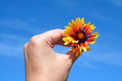 Being optimistic. Female hand holding a flower against very blue sky, optimistic colours Stock Photo
