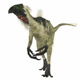 Beipiaosaurus Dinosaur on White. Beipiaosaurus was a herbivorous theropod dinosaur that lived in China in the Cretaceous Period Stock Photography