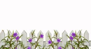 A beira branca da cerca de piquete com a beira roxa das flores isolada no branco com espaço para a cópia acima - telhará horizont fotografia de stock