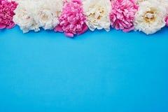 Beira branca e cor-de-rosa das peônias no fundo azul Copie o espaço, a Imagens de Stock