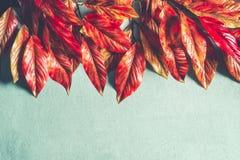 Beira brilhante das folhas de outono do vermelho alaranjado no fundo de turquesa, vista superior com espaço da cópia Disposição d imagens de stock royalty free