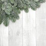 Beira coberto de neve do abeto Foto de Stock Royalty Free