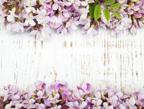 Beira com flores da acácia Imagens de Stock