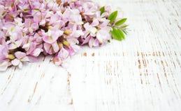 Beira com flores da acácia Imagem de Stock Royalty Free