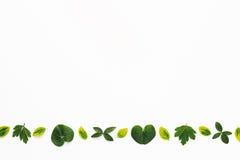 Beira com folhas verdes Fotos de Stock