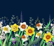 Beira com narcisos amarelos e as flores selvagens Vetor ilustração do vetor