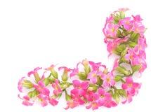 Beira cor-de-rosa da flor Fotos de Stock Royalty Free
