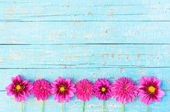 Beira cor-de-rosa das flores do Amaryllis Foto de Stock