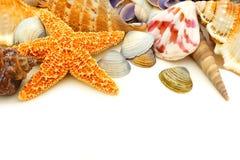Beira da concha do mar imagens de stock