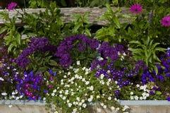 Beira da flor Imagem de Stock
