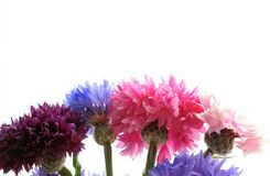 Beira da flor Fotos de Stock Royalty Free