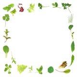 Beira da folha da erva e da alface ilustração stock