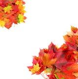 Beira da folha do bordo do outono Imagens de Stock Royalty Free