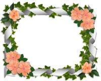 Beira da hera com hibiscus Foto de Stock Royalty Free