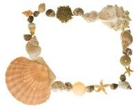 Beira da vida de mar Imagem de Stock Royalty Free