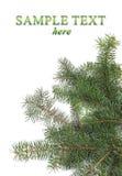 Beira das filiais de árvore do Natal Imagens de Stock