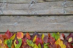 Beira das folhas de outono coloridas na madeira Imagem de Stock Royalty Free