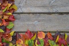 Beira das folhas de outono coloridas na madeira Imagem de Stock