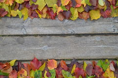 Beira das folhas de outono coloridas na madeira Imagens de Stock Royalty Free