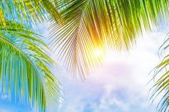 Beira das folhas de palmeira Foto de Stock Royalty Free