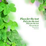 Beira das folhas verdes. Fotografia de Stock