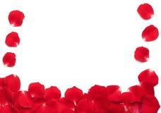 Beira das pétalas de Rosa vermelha imagem de stock royalty free
