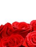 Beira das rosas vermelhas Fotografia de Stock Royalty Free