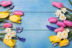 A beira das tulipas cor-de-rosa, amarelas e dos narcisos amarelos brancos floresce sobre Fotografia de Stock Royalty Free