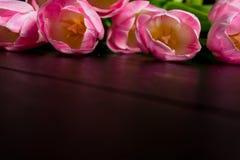 A beira das tulipas cor-de-rosa brilhantes floresce no fundo de madeira preto Fotografia de Stock
