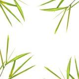 Beira de bambu da folha fotografia de stock
