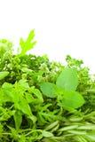 Beira de ervas frescas diferentes da especiaria sobre o fundo branco/v Foto de Stock Royalty Free