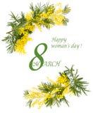 Beira de flores da mimosa Imagens de Stock
