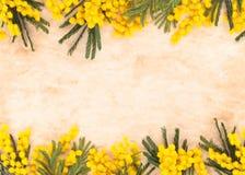 Beira de flores da mimosa Imagens de Stock Royalty Free