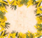 Beira de flores da mimosa Foto de Stock