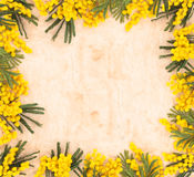 Beira de flores da mimosa Fotos de Stock Royalty Free