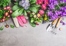 Beira de jardinagem com ferramentas de jardim, luvas, sujeira e os vários potenciômetros de flores no fundo concreto de pedra cin Fotografia de Stock
