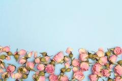 Beira de rosas cor-de-rosa pequenas no fundo azul Lugar para o texto Foto de Stock
